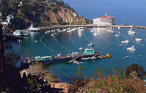 Catalina Picture